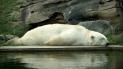 polar_bear_bear_lie_down_sleep_water_40684_602x339
