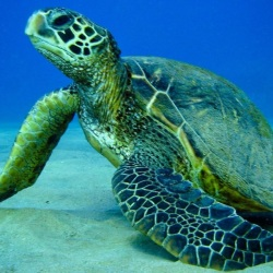 cool-sea-creatures-pictures