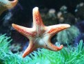 weird-marine-sea-creatures-behaviors-sea-starfish