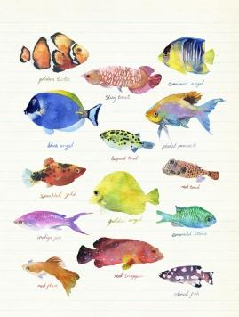 tropical-fish_900