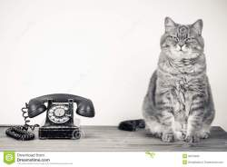 cat-retro-telephone-portrait-sat-next-to-white-background-copy-space-32215259
