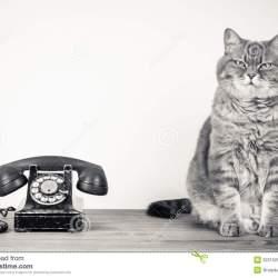 cat-retro-telephone-portrait-sat-next-to-white-background-copy-space-32215259