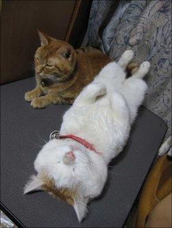 cat-shiro-18